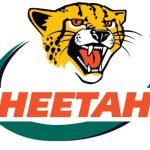 Cheetahs-48 x 33