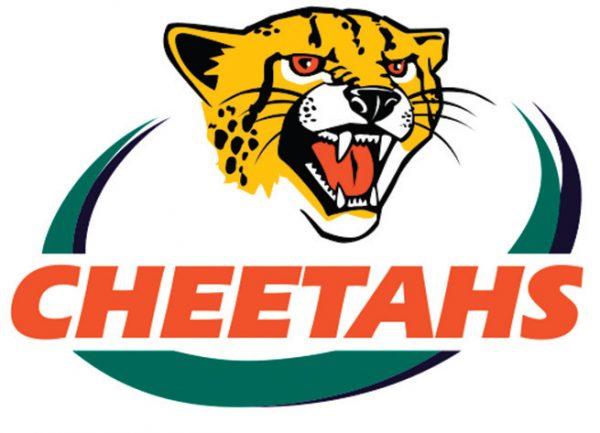 Cheetahs 48 x 33